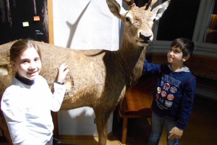 Der Wald und seine Tiere – Besuch im Naturmuseum